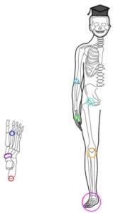 骨端症の発症部位